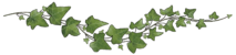 single-curved-ivy